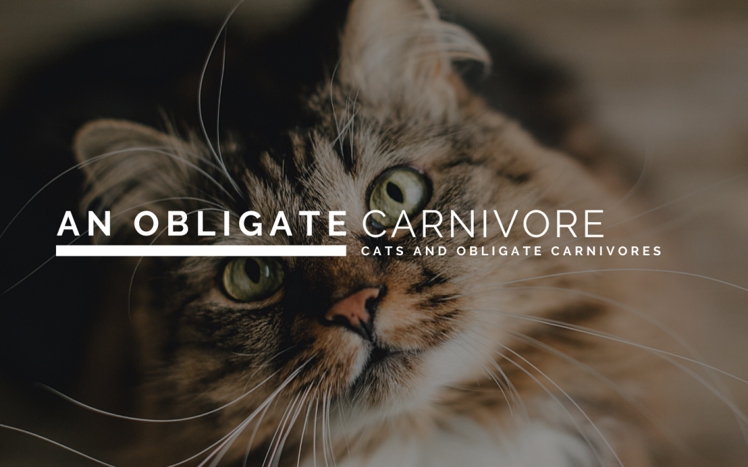 What is an Obligate Carnivore?